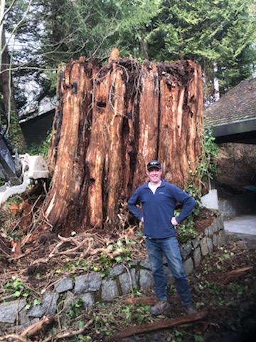 stump removal - Erickson excavating